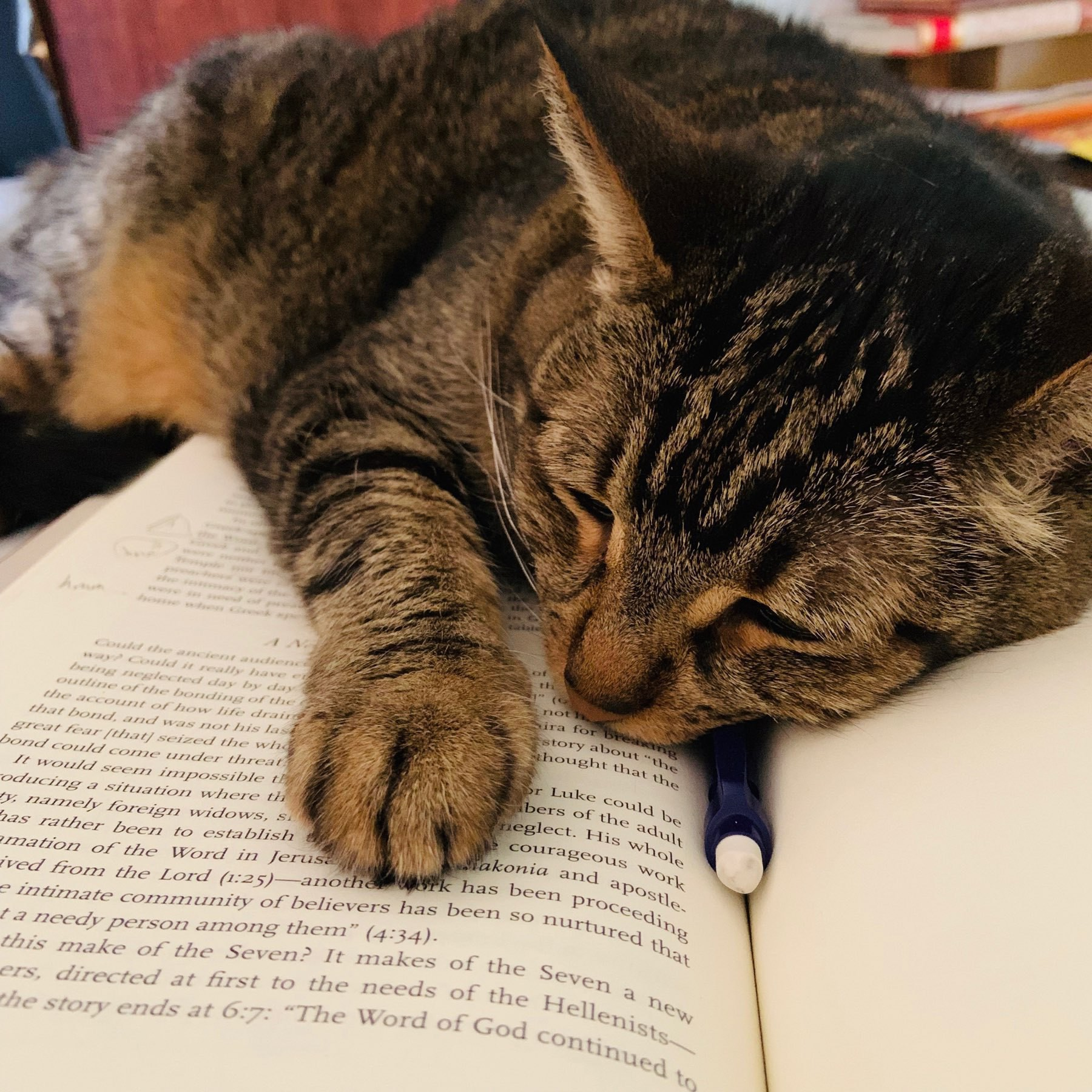 cat sleeping on a book
