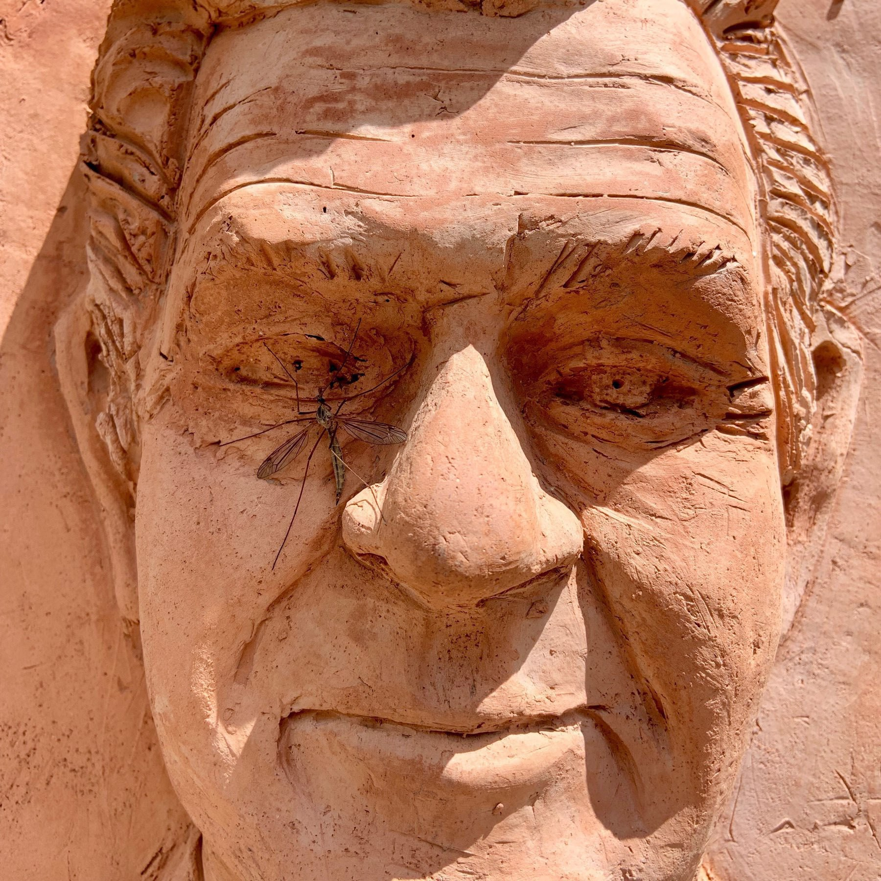 Crane fly on a sculpture of an older man's face