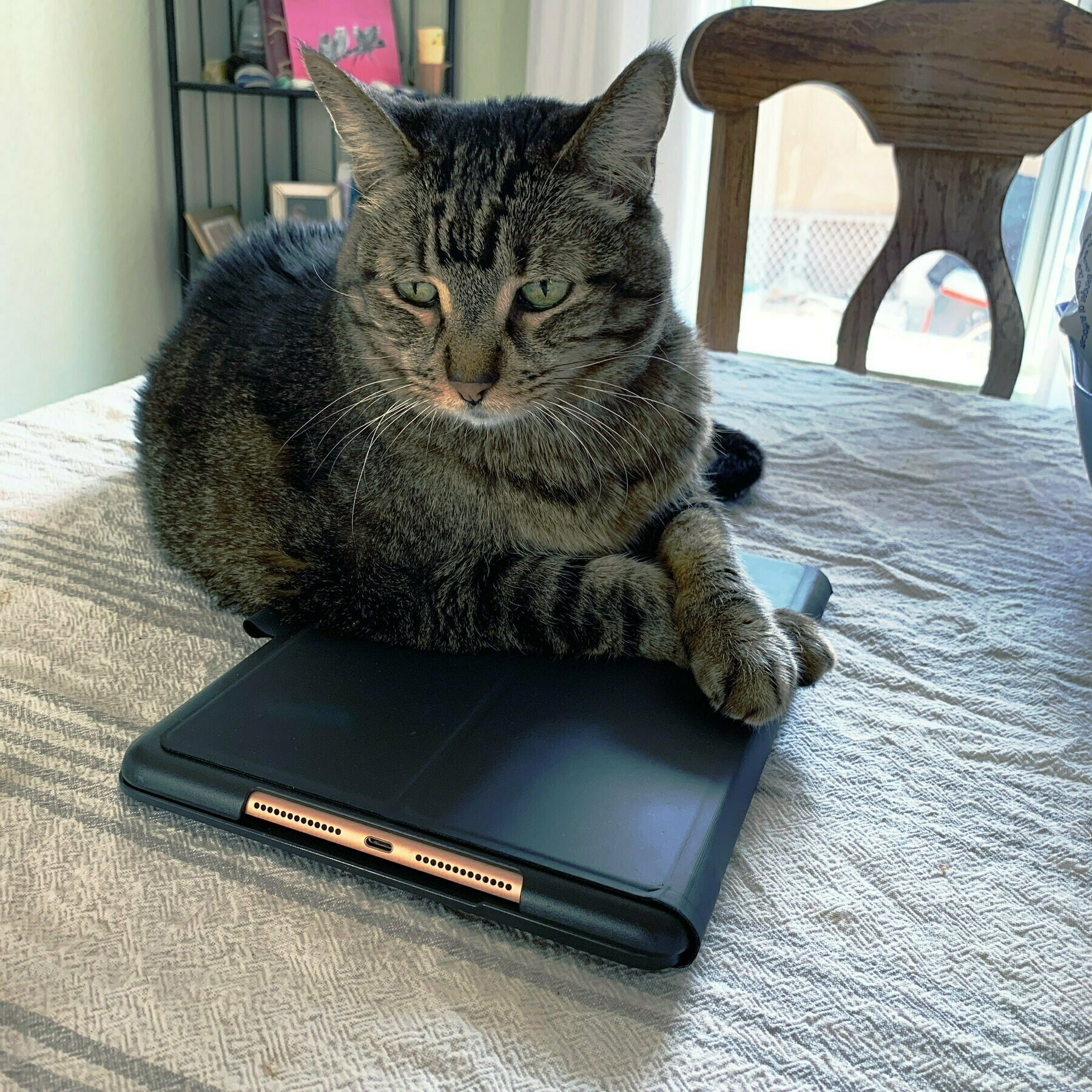 cat laying on ipad