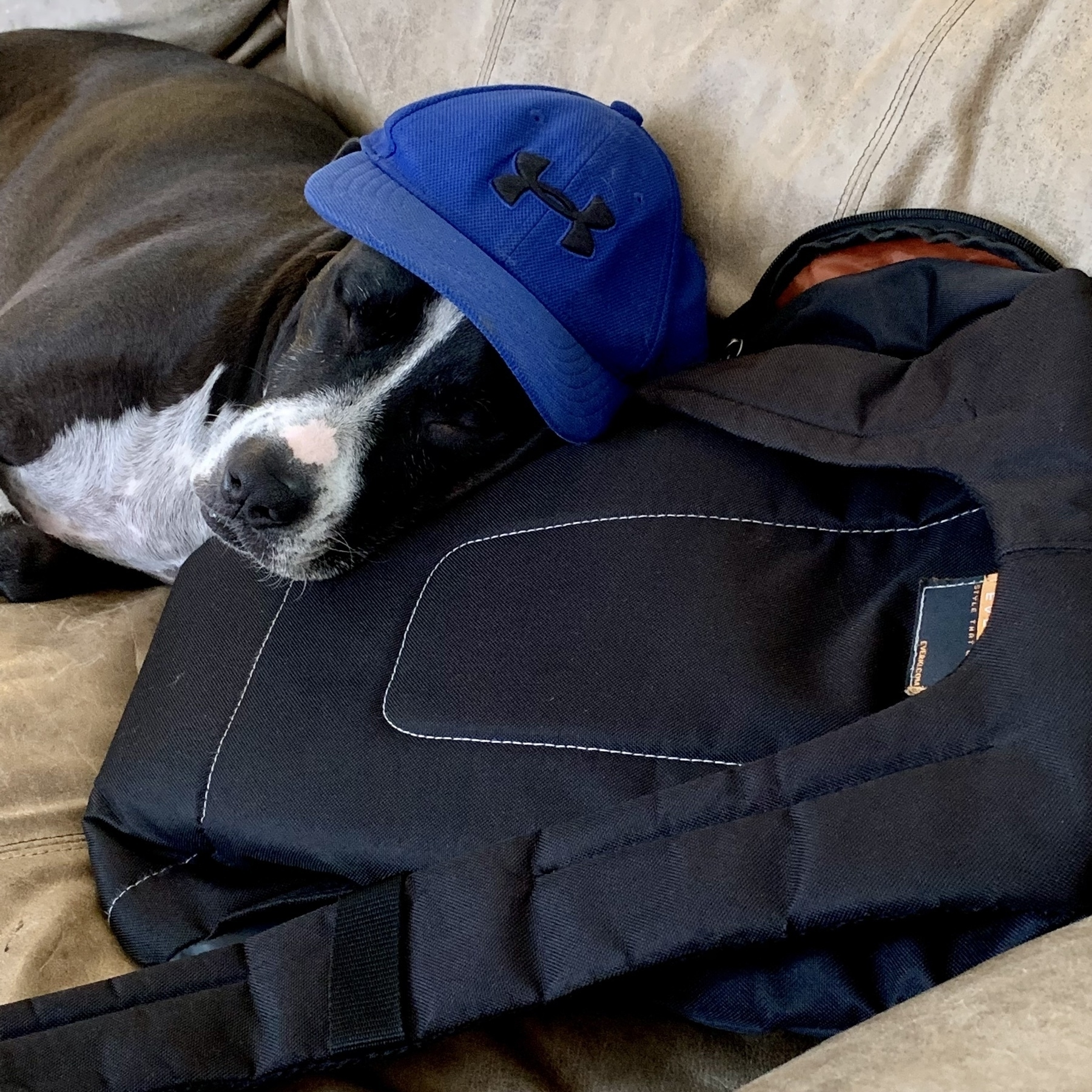 dog with hat on pack