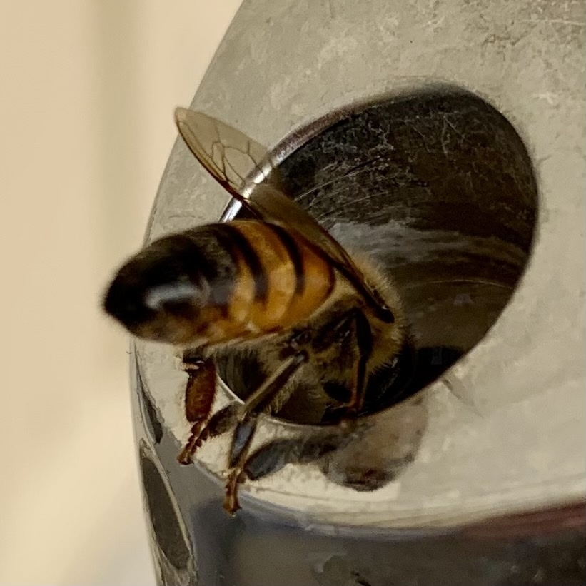 a bee drinking from a drinking fountain